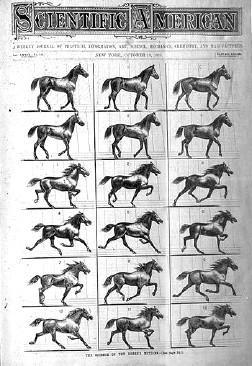 Horses Gaits